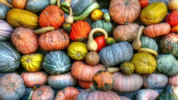 Cuina de tardor - Mercè Homar, cuina conscient i saludable